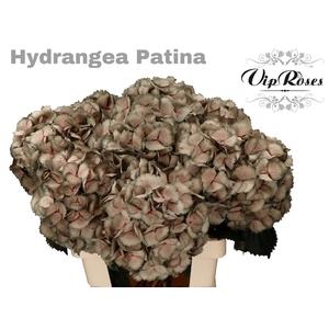 HYDR M PATINA L 70 cm