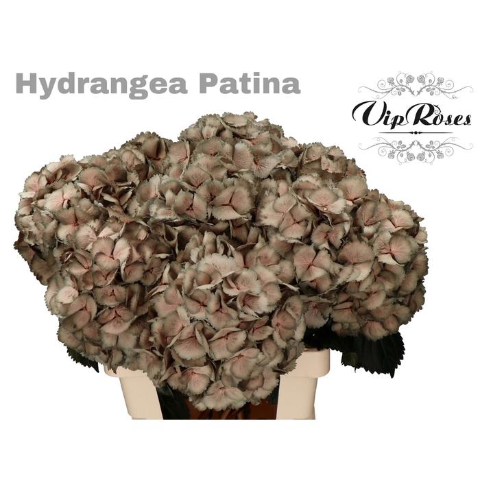 <h4>HYDR M PATINA L 60 cm</h4>