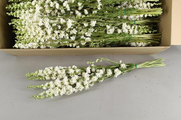 <h4>Df Delphinium White Bs 50gram</h4>