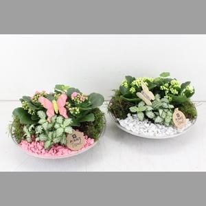 arr. PL - Glas schaal 27cm - roze/wit