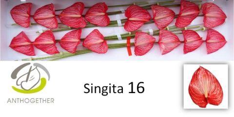 <h4>Anth Singita</h4>