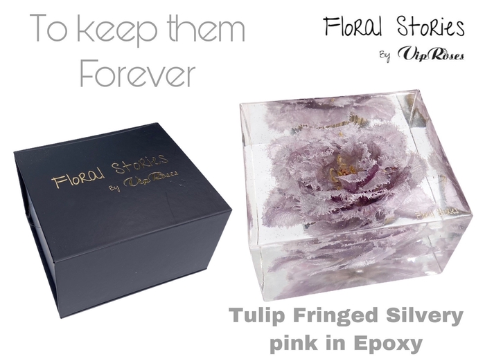 <h4>VIP FOSSIL EPOXY TULIP SILVERY PINK</h4>