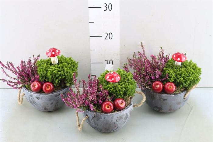 <h4>Arr Tuinplanten 6%</h4>