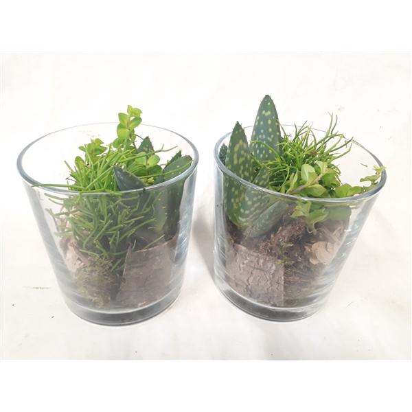 <h4>933 GMX Cil glas mini groenmix + houtdeco</h4>