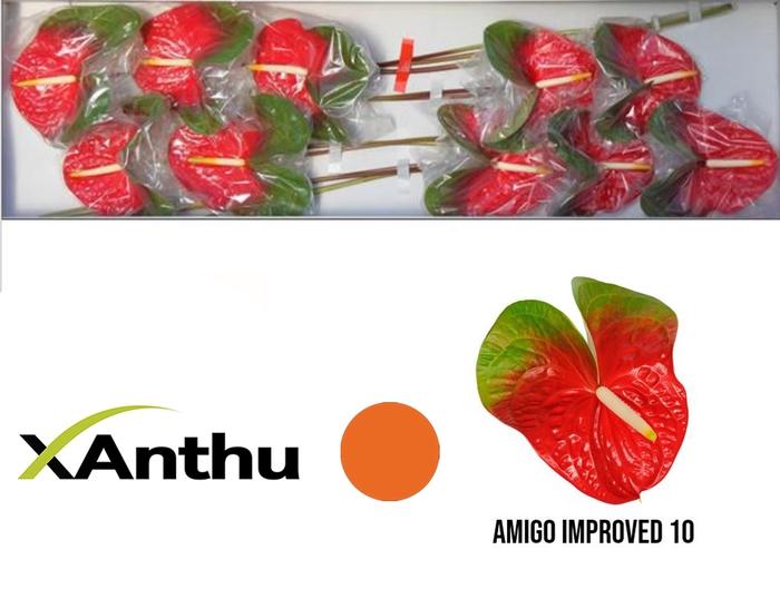 <h4>ANTH A AMIGO IMPROVE</h4>