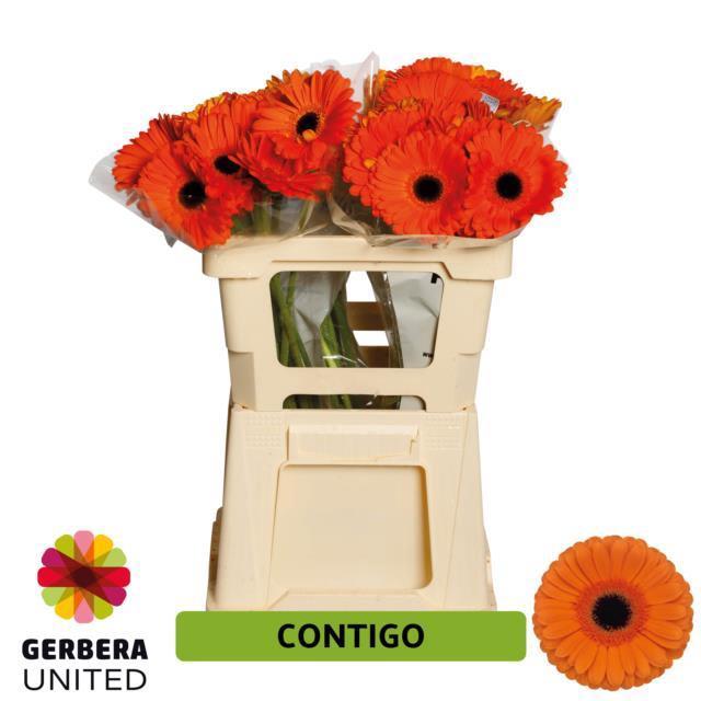 <h4>GE GR CONTIGO</h4>