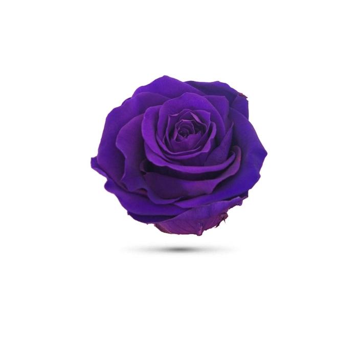 <h4>Rosa preservada cabeza morada</h4>