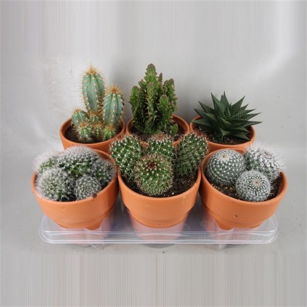 <h4>art.118 Rozenpot cactus 12 cm</h4>