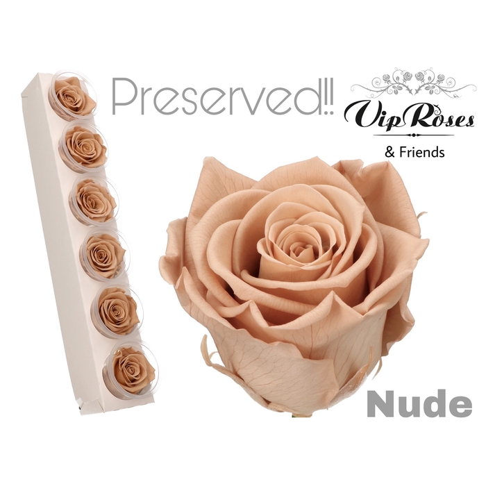 <h4>R PRESERVED NUDE</h4>