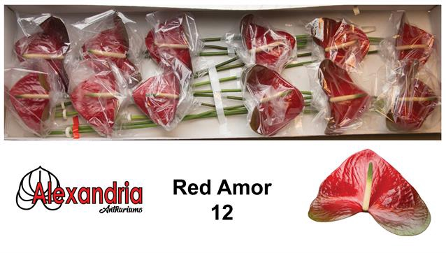 <h4>ANTH A RED AMOR</h4>