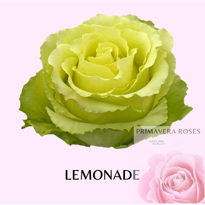 <h4>R GR LEMONADE</h4>