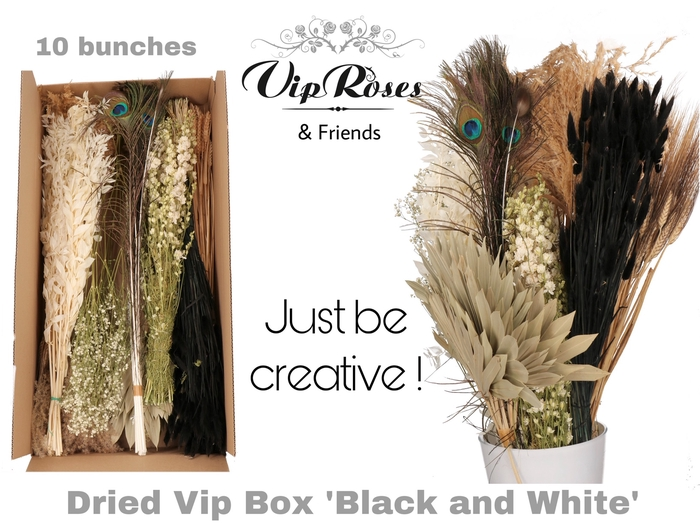 DRIED VIP BOX BLACK & WHITE