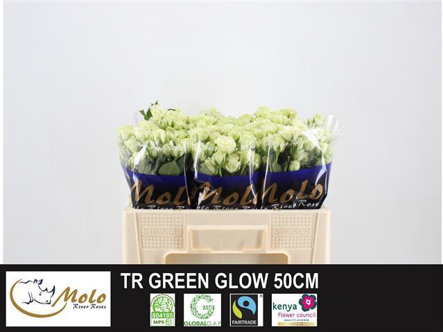 <h4>R TR GREEN GLOW</h4>