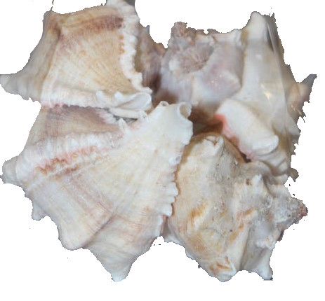 <h4>Shell White mulli 1 kg in poly</h4>