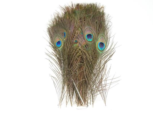 <h4>Feather Peacock 30cm</h4>