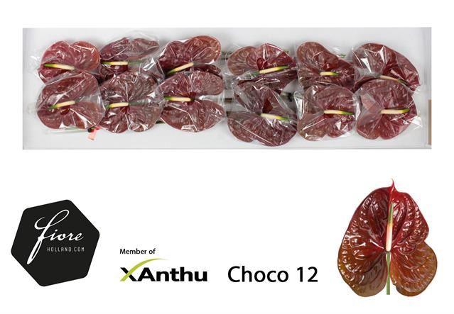 <h4>Anth Choco</h4>