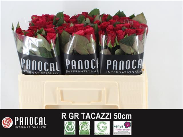 <h4>R GR TACAZZI+</h4>