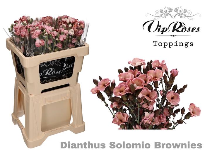 DI SOLOMIO BROWNIES (L50cm)