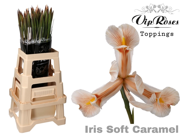 <h4>IRIS SOFT CARAMEL</h4>