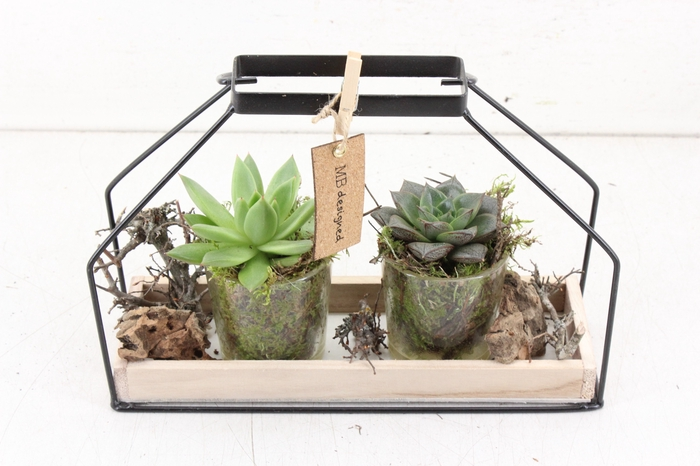 <h4>arr. MB - Hout huis frame echeveria</h4>