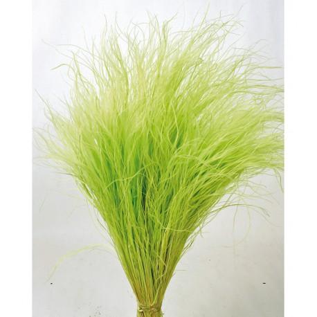<h4>Stypa pennata verde limon seca (50 cm)</h4>