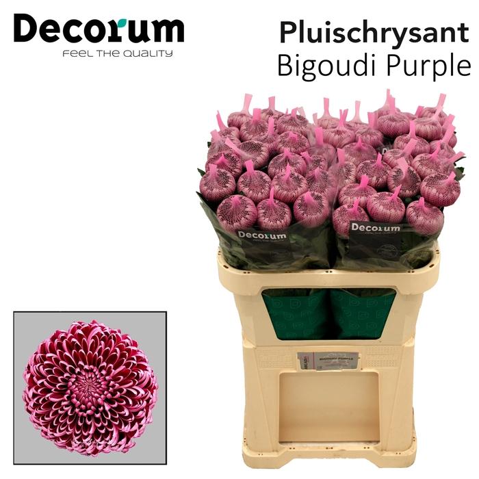 <h4>Chr G Bigoudi Purple</h4>