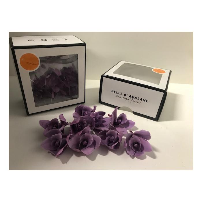 <h4>Cymbidium S purple 369</h4>