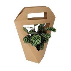 <h4>Bouquetholder Karton 11*11*34cm</h4>