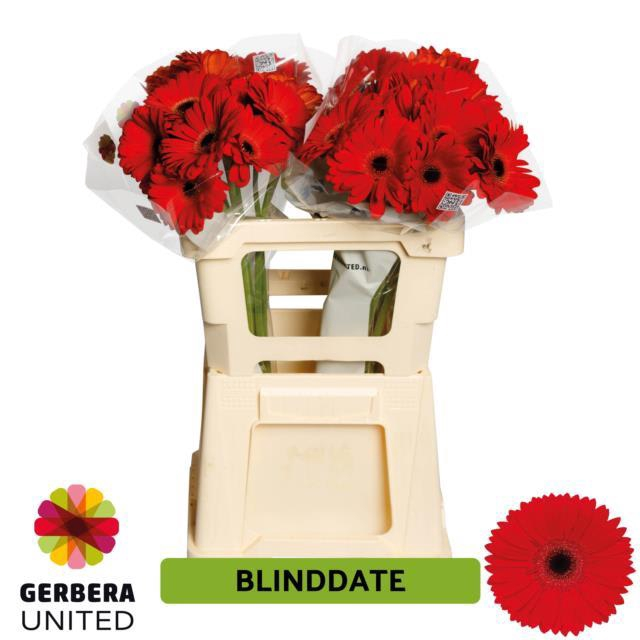 <h4>GE GR BLINDDATE</h4>