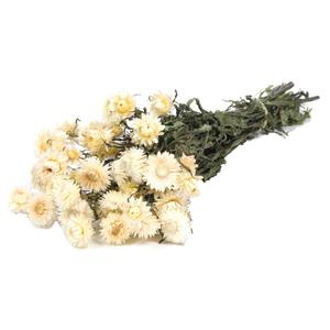 Helichrysum white nat. Craft