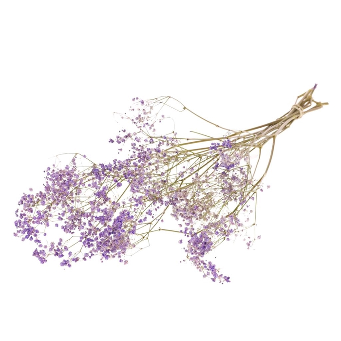 <h4>Gypsophila dried purple</h4>