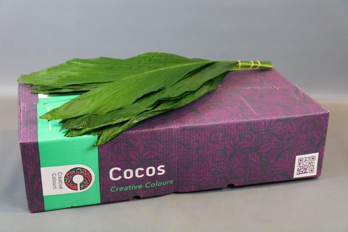<h4>Cocos XXXL-Large Creative Colours</h4>