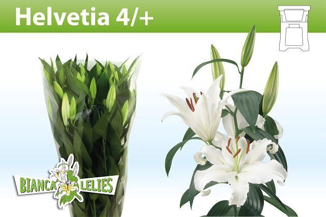 <h4>Li Or Helvetia</h4>