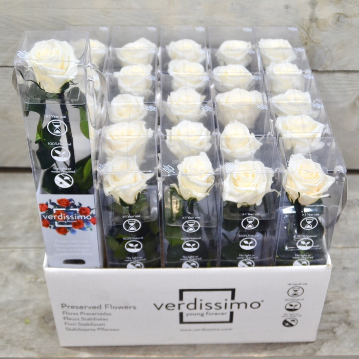 <h4>R PR Amorosa Mini Champagne</h4>