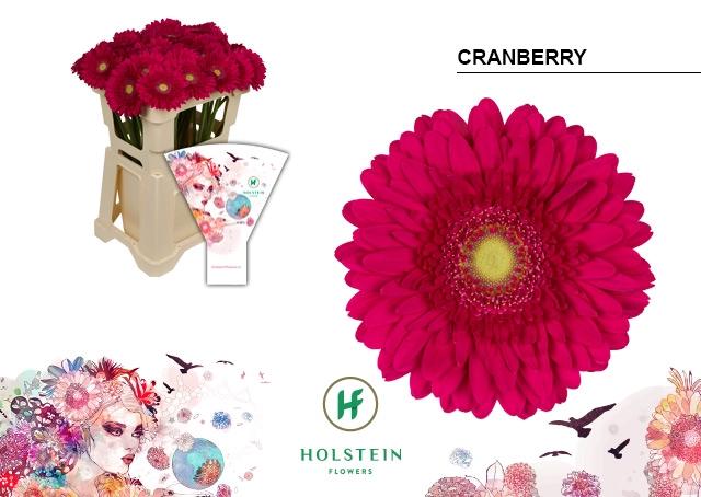 <h4>GE GR hoes Cranberry</h4>