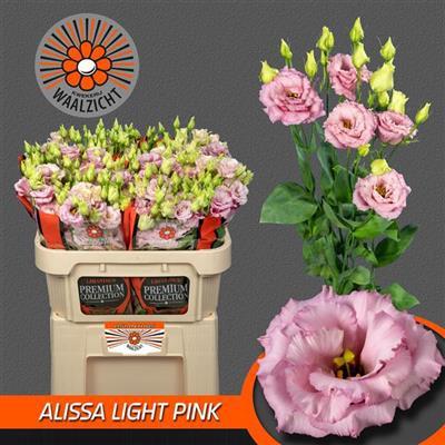 <h4>EUS G ALISSA LIGH PI</h4>