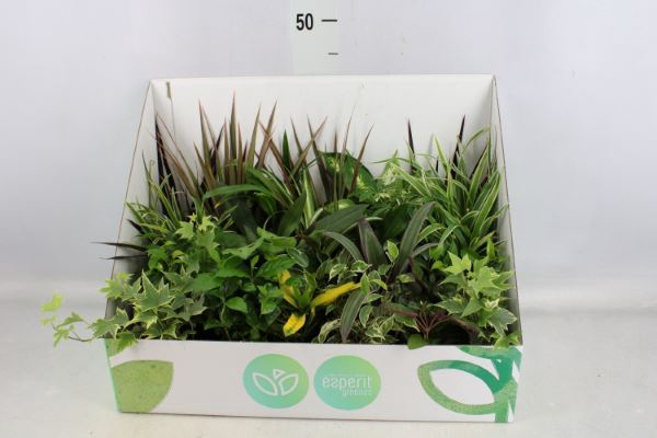 <h4>Planten  ..mix</h4>