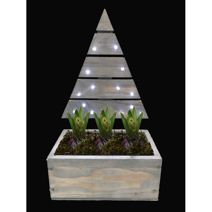 <h4>Arrangement Hyacint Kerstboom(1) met Led</h4>