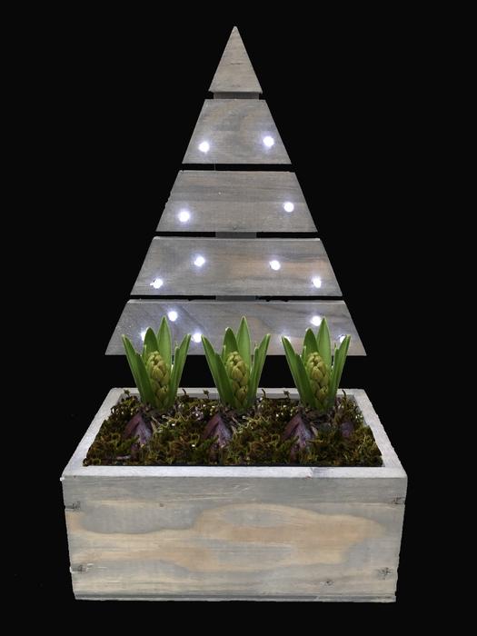 <h4>Arrangement Hyacint Kerstboom(1) met Led</h4>