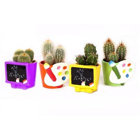 <h4>Cactus Schoolbord Verfpallet</h4>
