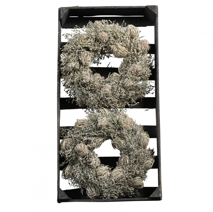 <h4>Wreath d25cm Ammi Majus/Sorfaka wax</h4>