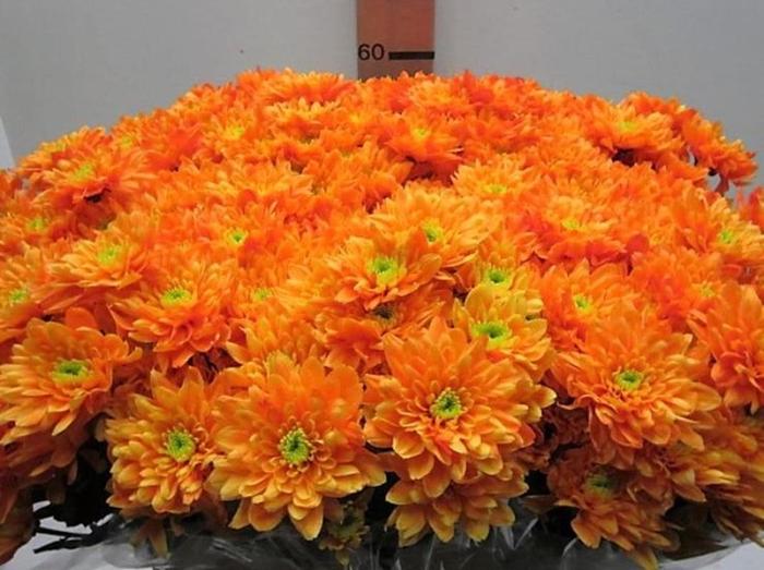 <h4>Chr T Euro Oranje</h4>