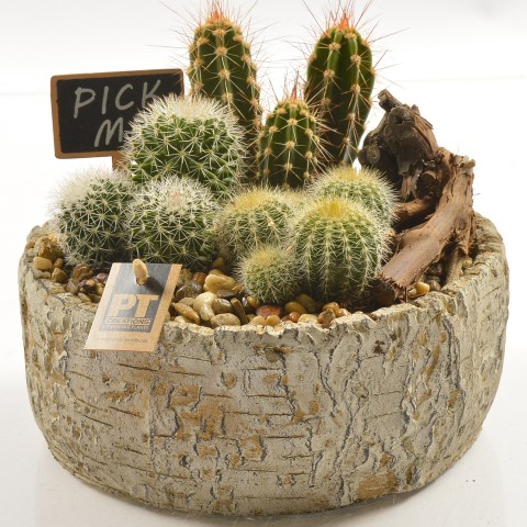 <h4>PTCT9851 Arrangementen Cactus</h4>