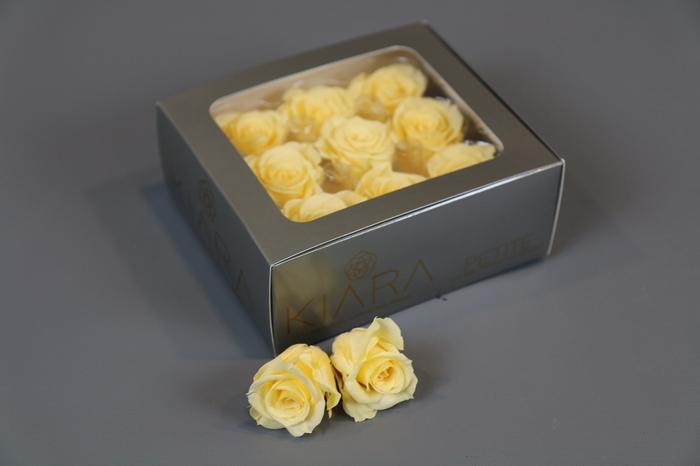 <h4>Rosa Preserved Champagne Petite</h4>