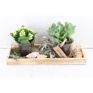 arr. MB - Hout tray 2 glas