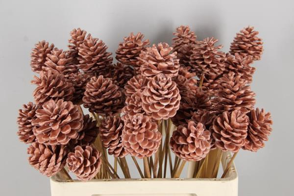 <h4>Stick Pine Cone  Wax Caramel</h4>
