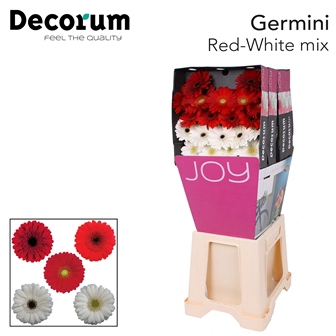 <h4>Ge Mi diamond mix Red-White</h4>