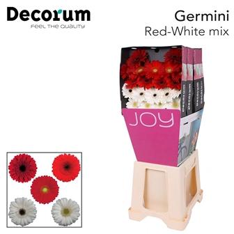 <h4>Ge Mi diamond mix Red-White</h4>