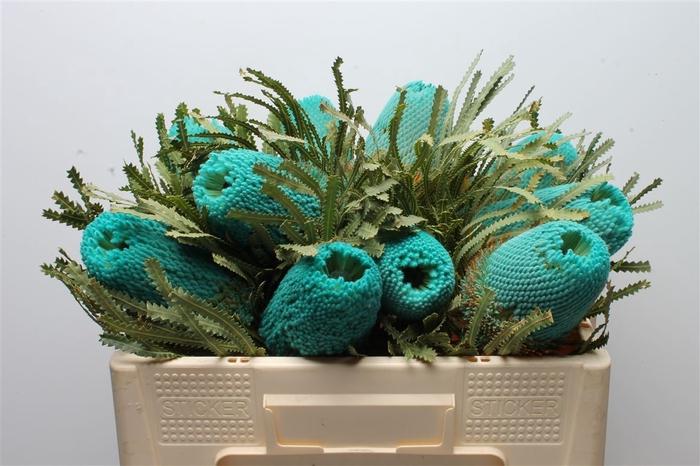 <h4>Banksia Hookeriana Turqoise</h4>