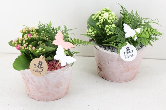 arr. PL - Terra cotta pot 811/3 - roze/wit